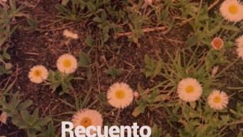 Flores Silvestres - São Lindas Imagens Dessas Flores Maravilhosas!