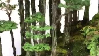Floresta De Bonsai, Veja Que Coisa Mais Linda Esta Miniatura!