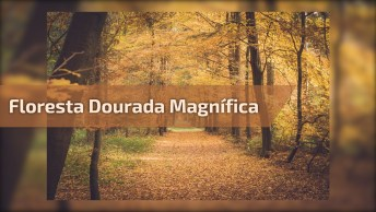 Floresta Dourada, Uma Das Maravilhas Que A Natureza Nos Proporciona!