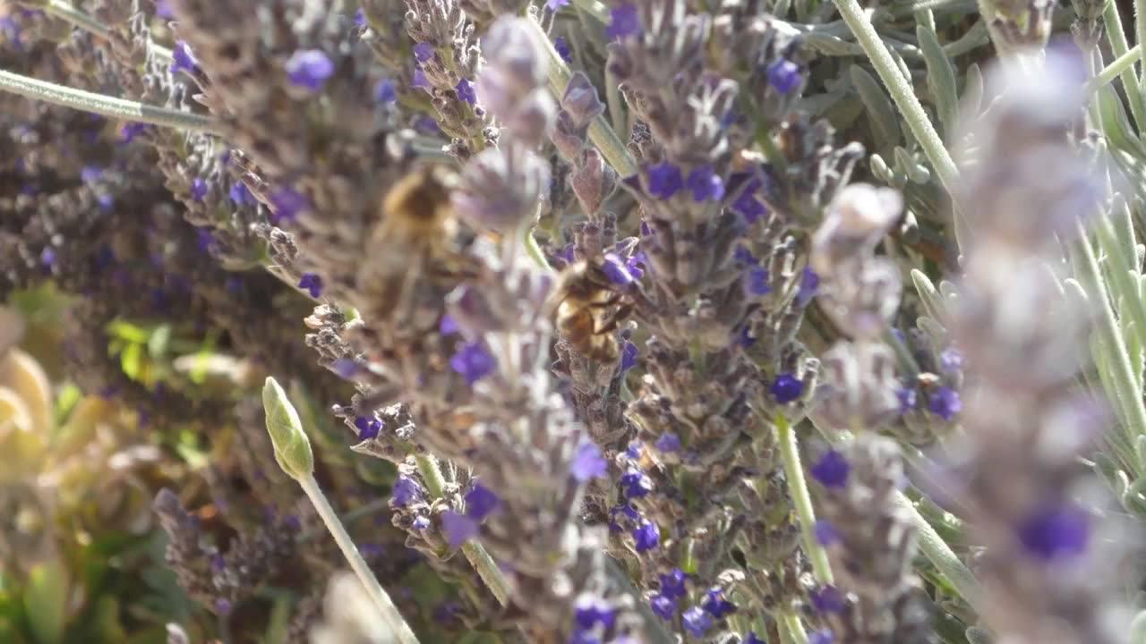 Fotos da natureza, como são belas as flores