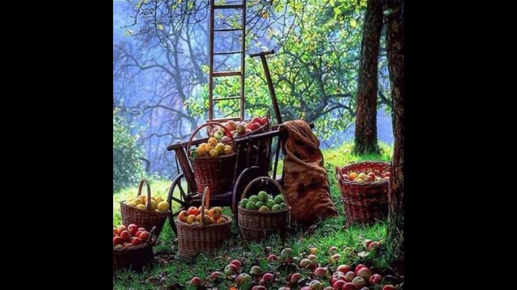 Fotos de arvores frutíferas