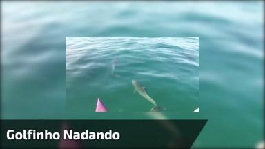 Golfinho Nadando Próximo De Um Caiaque, Olha Só Que Imagem Espetacular!