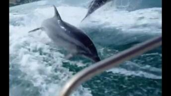 Golfinhos Nadando No Mar! A Natureza É Magnifica, Muito Lindo De Ver!
