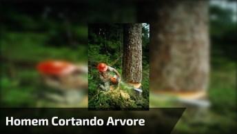 Homem Cortando Árvore E Quase Que Da Errado Confira, Esse Nasceu De Novo!