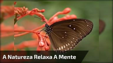 Imagens Da Natureza Com Música Relaxante!