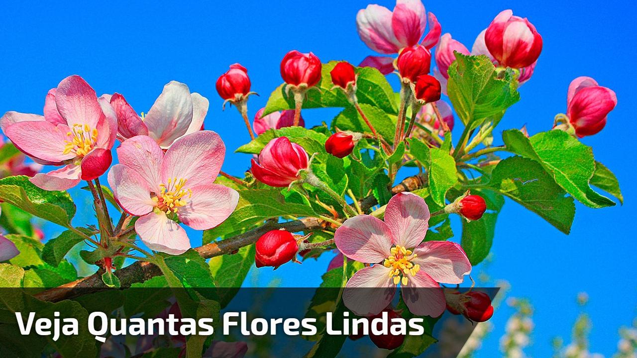 Veja quantas flores lindas