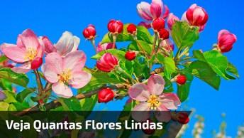 Imagens Da Natureza No Japão, Quantas Flores Lindas, Confira!