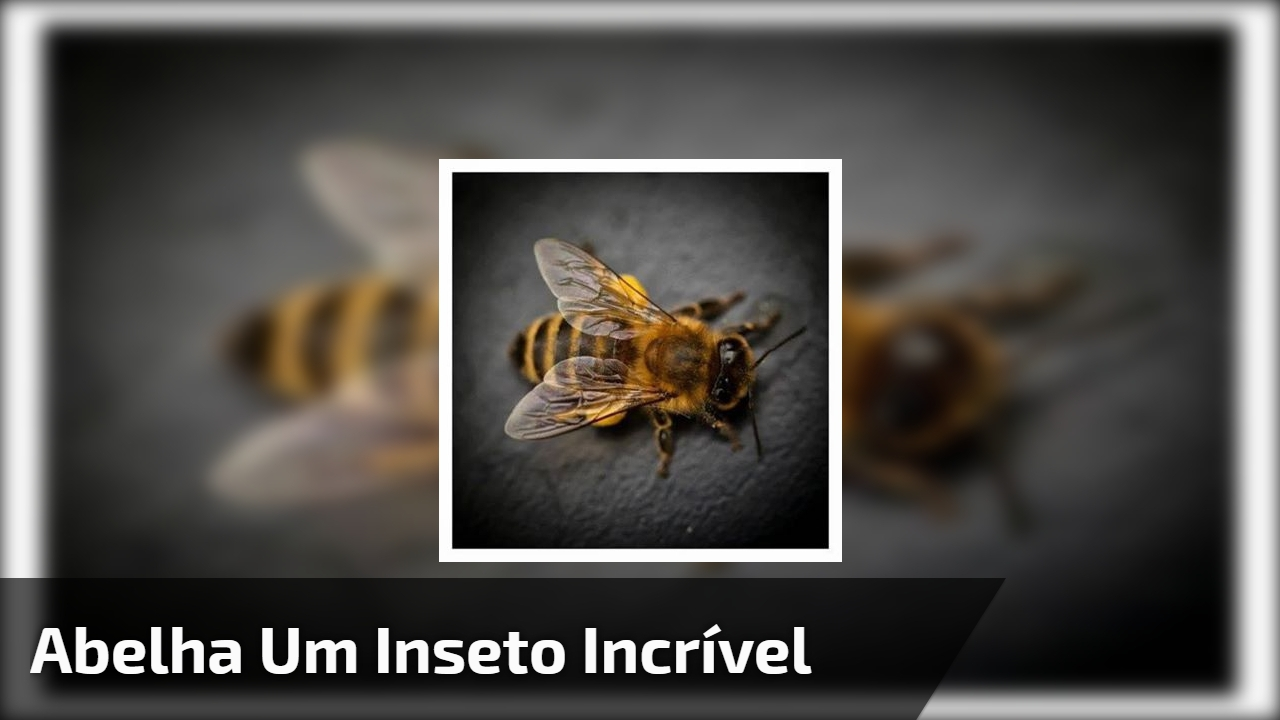 Imagens de abelha, os insetos mais incríveis da natureza!!!