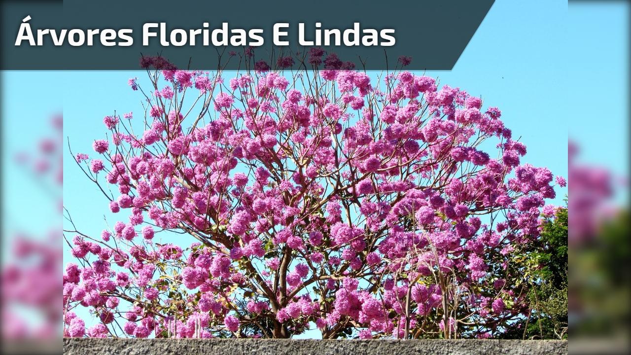 Árvores Floridas e lindas