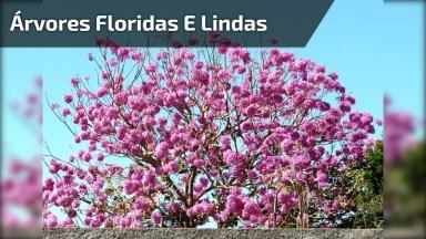 Imagens De Árvores Floridas, Um Vídeo Perfeito Que Retrata A Natureza!