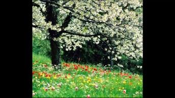 Imagens De Árvores, Uma Mais Linda Que A Outra, Perfeitas Para Compartilhar!
