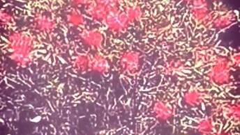 Imagens De Flores Lindas Para Compartilhar No Facebook, Confira!