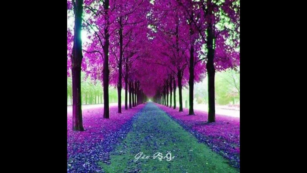 Imagens lindas de flores, a natureza é incrível, confira!