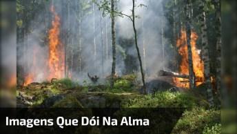 Imagens Que Dói Na Alma, Uma Floresta Com Queimada, Lamentável!