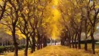 Ipês Amarelos Simplesmente Maravilhosos, Veja Que Linda Esta Estrada!