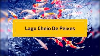 Jardim Com Lago Cheio De Peixes, Pedacinho Do Paraíso Para Recarregar Energias!