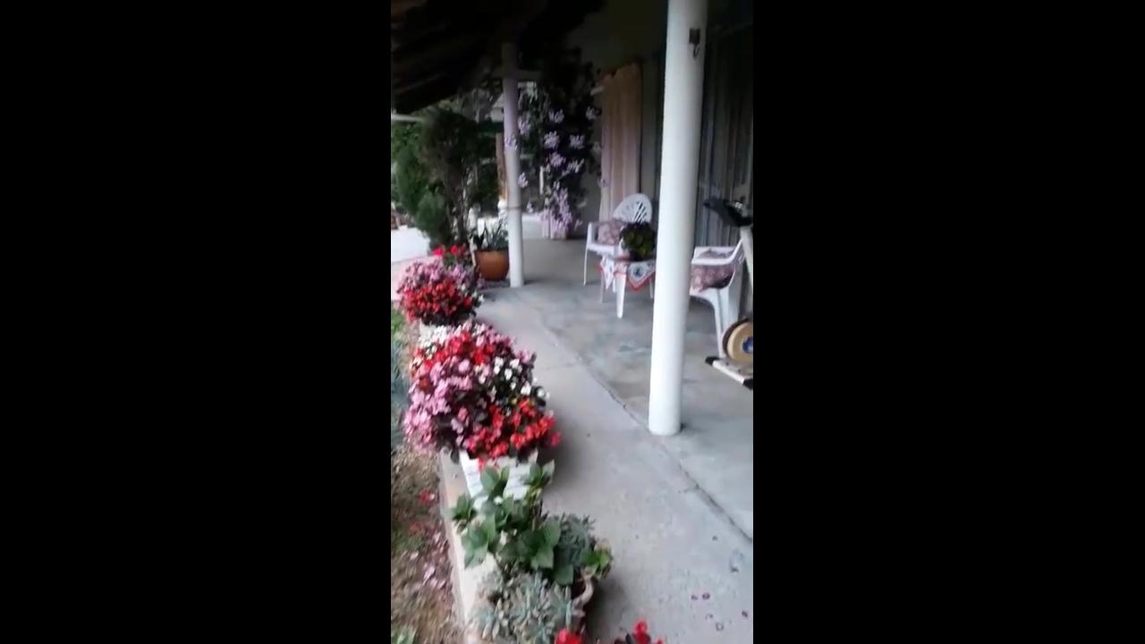 Jardim em vasos uma ótima opção para deixar a natureza pertinho de você