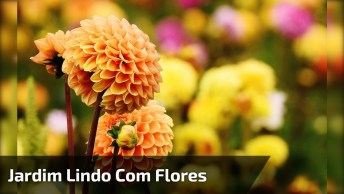 Jardim Lindo Com Flores Coloridas Que Formam Desenhos, Vale A Pena Conferir!