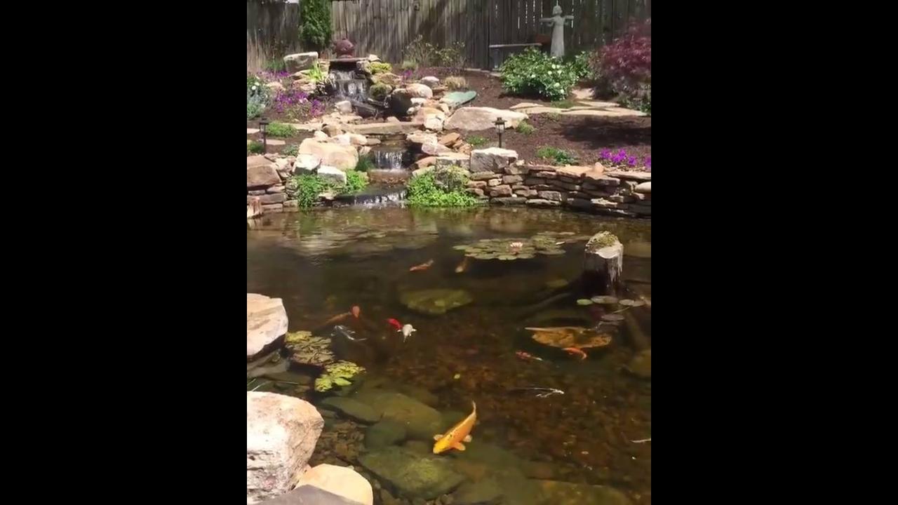 Lago com lindos peixes, que lugar maravilhoso