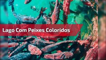 Lago Com Peixes Coloridos Lindo, A Natureza É Maravilhosa!