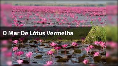 Lago Na Tailândia Forrado Por Lótus, O 'Mar De Lótus Vermelha'!