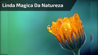 Linda Mágica Da Natureza O Abrir Das Limpidíssimas Flores, Aprecie!
