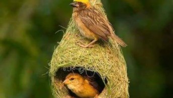 Lindas Imagens De Pássaros Na Natureza, Por Que Eles Nasceram Para Serem Livres!