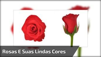 Lindas Rosas, Cada Uma Com Seu Significado Simbólico E Sua Peculiaridade!