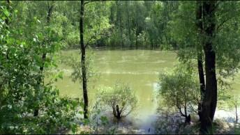 Momento De Apreciar A Calmaria Deste Lindo Rio, E A Natureza A Sua Volta!
