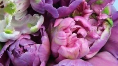 Momento De Apreciar As Lindas Flores De Nossa Fascinante Natureza!