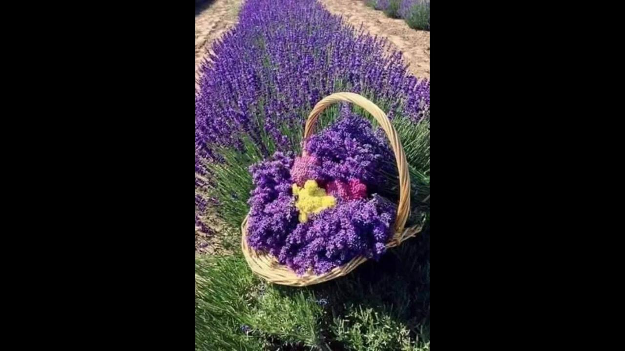 Momento de apreciar as lindas flores de nossa graciosa natureza
