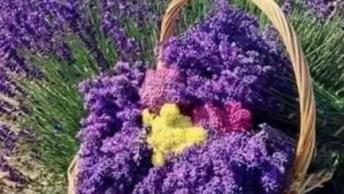Momento De Apreciar As Lindas Flores De Nossa Graciosa Natureza!