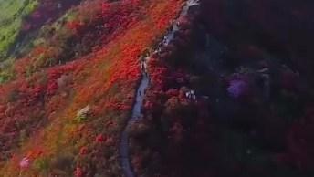 Montanha Cheia De Flores Em Algum Lugar Do Mundo, Que Imagem Mais Linda!