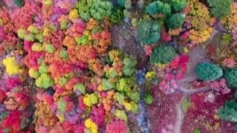 Montanha Com Arvores Coloridas No Norte De Utah, Veja Que Coisa Mais Linda!