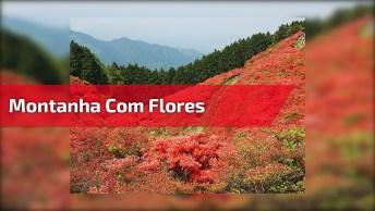Montanha Com Flores Lindas, Um Lugar Que Parece De Mentira De Tão Lindo!