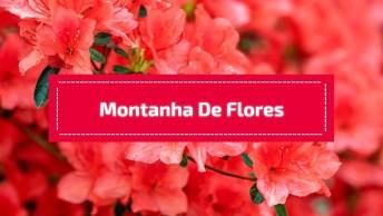 Montanha Forrada De Flores Vermelhas, A Natureza É Mesmo Maravilhosa!
