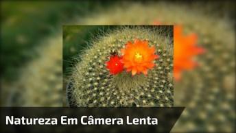 Movimentos Da Natureza Em Câmera Lenta, Surpreendente, Confira!