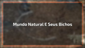 Mundo Natural E Seus Bichos Assustadores, A Natureza É Mesmo Fantástica!
