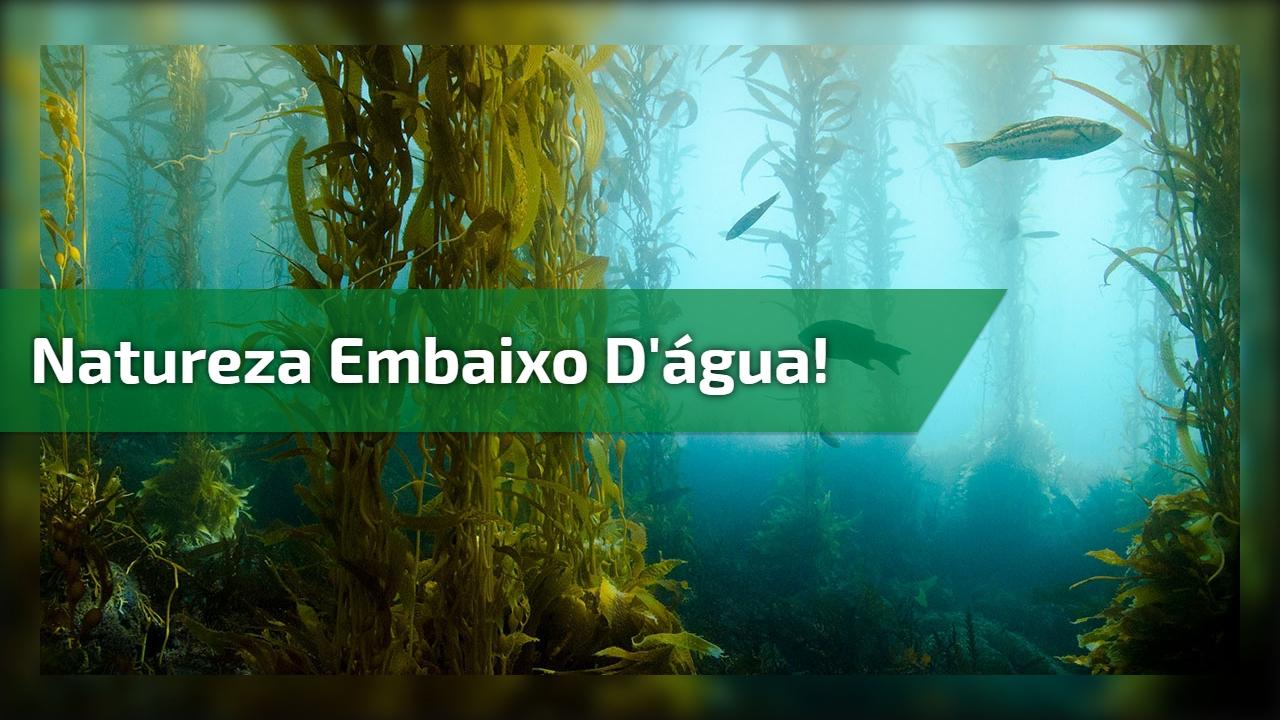 Natureza embaixo d'água!