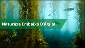 Natureza Em Baixo D'Água, Veja Que Lindas Plantas No Fundo Deste Lago!