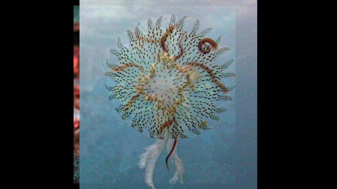 Natureza maravilhosa até no fundo do mar
