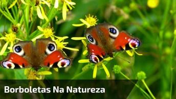 Natureza Maravilhosa, Veja Estas Lindas Borboletas Sentadas Em Uma Planta!