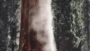 Neve Evaporando Do Tronco De Uma Árvore Com Bater Do Sol, Incrível!