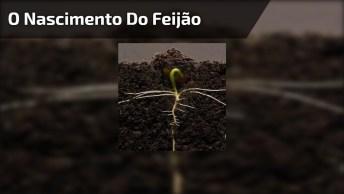 O Nascimento De Uma Planta Desde O Grão, Que Resultado Incrível!