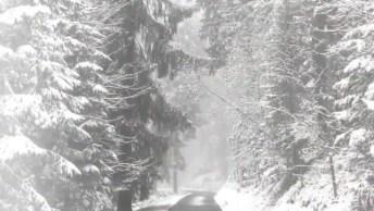 Paisagem De Nevasca, Veja Como É Lindo As Arvores Cobertas De Neve!