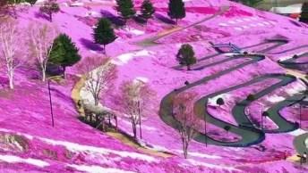 Parque De Hitsujiyama No Japão, Um Dos Mais Belos Parques Para Se Visitar!