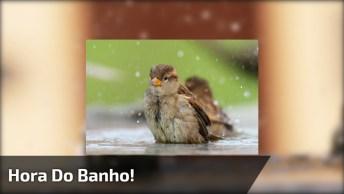 Passarinhos Tomando Banho, A Natureza É Muito Linda Em Cada Detalhe!