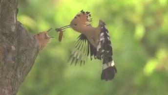 Pássaro Alimentando Seu Filhote No Ninho, A Natureza É Demais!