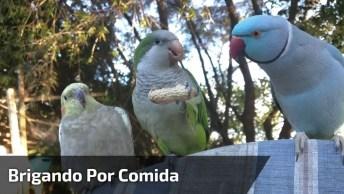 Pássaros Brigando Por Causa De Comida, Que Coisa Linda Da Natureza!