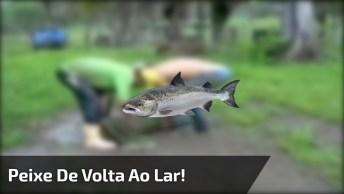 Peixe Sendo Levado De Volta Para Água, Veja Como Ele Sabe O Caminho De Casa!